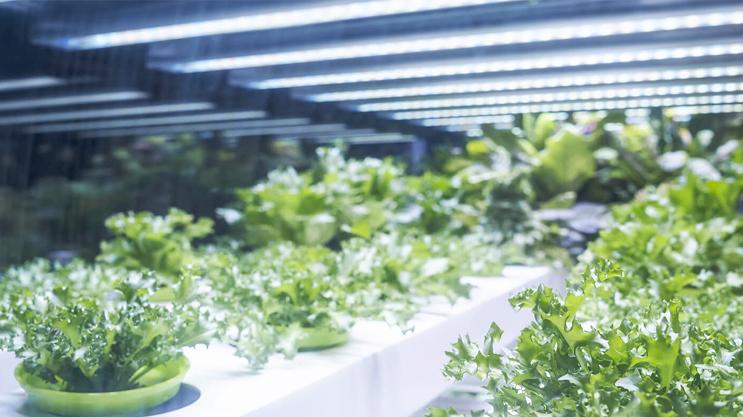 Compatti ma potenti, i moduli LED PowerBar sono perfetti per la crescita delle piante.